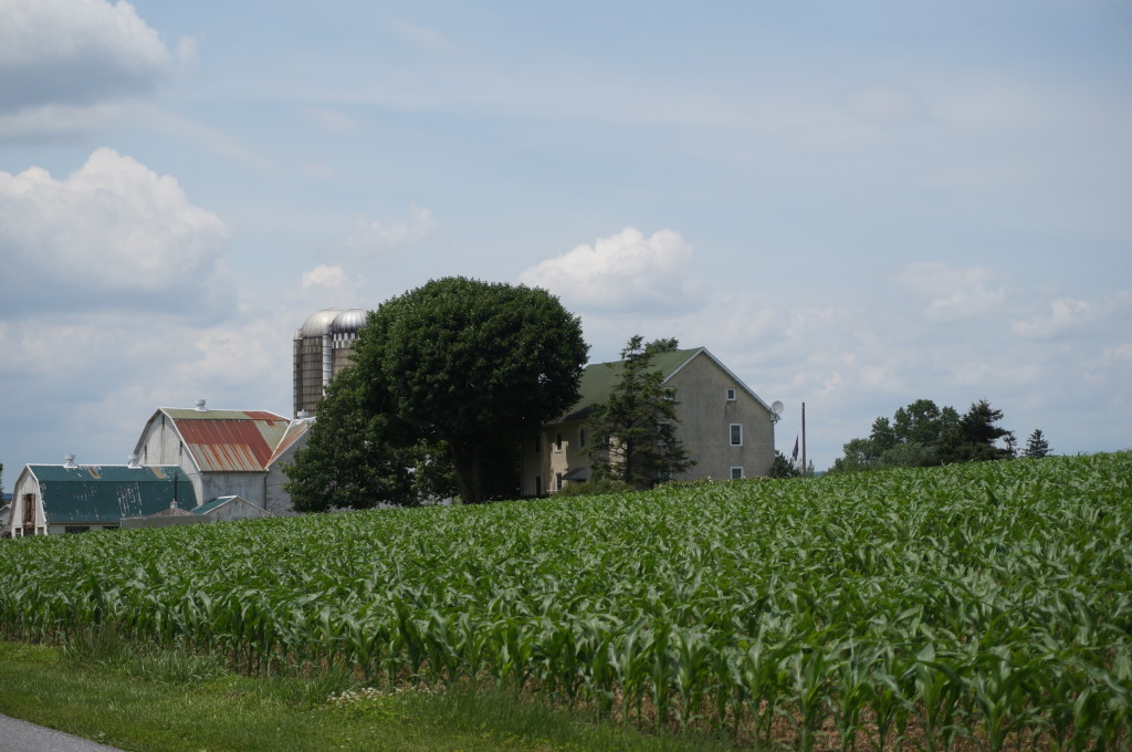 Our crops flourish with no-till program